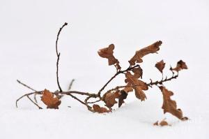 dead branch on ground